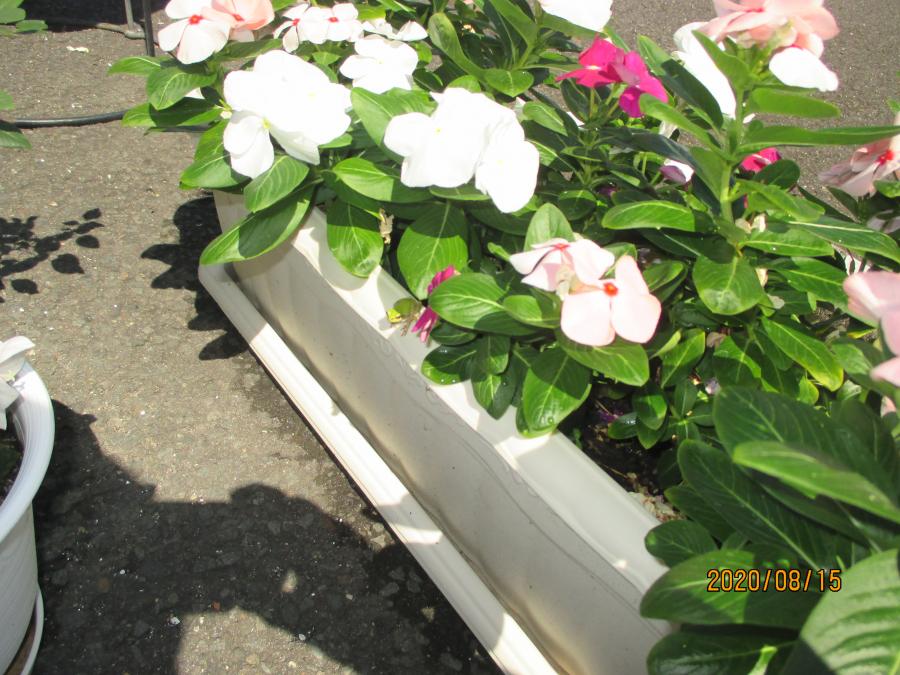 プランターのお花が大好きなカエル【徳島田宮店】 徳島県徳島市にあるザ・ゴールド 徳島田宮店の画像2