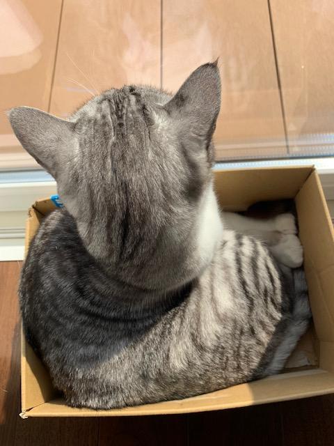 癒し猫☺【丸亀店】 香川県丸亀市にあるザ・ゴールド 丸亀店の画像3