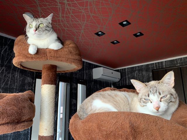 癒し猫☺【丸亀店】 香川県丸亀市にあるザ・ゴールド 丸亀店の画像2