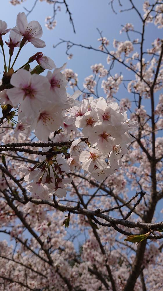 お花見【高松レインボー通り店】 香川県高松市にあるザ・ゴールド 高松レインボー通り店の画像2
