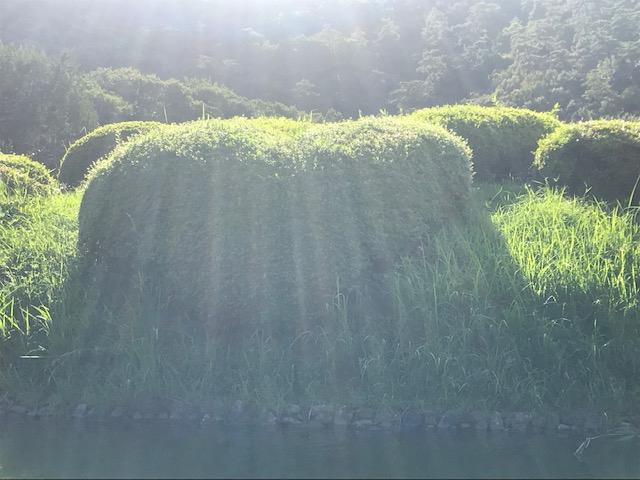 香川県 栗林公園へ行ってきました(๑˃̵ᴗ˂̵)و 広島県東広島市にあるザ・ゴールド 東広島店の画像3