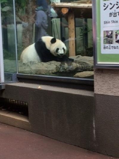 上野動物園♪ 【福山東店】 広島県福山市にあるザ・ゴールド 福山東店の画像2