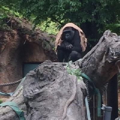 上野動物園♪ 【福山東店】 広島県福山市にあるザ・ゴールド 福山東店の画像3