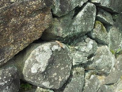 蜥蜴(トカゲ) 【浜松若林店】 静岡県浜松市にあるザ・ゴールド 浜松若林店の画像5