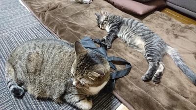 猫の睡眠【富山東店】 富山県富山市にあるザ・ゴールド 富山東店の画像3