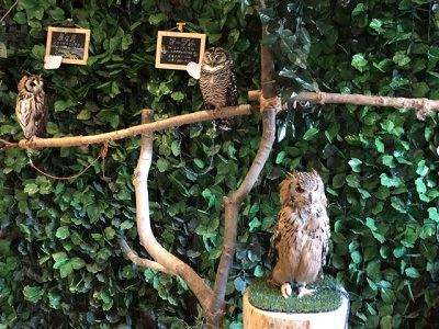 猫カフェ・・ではなくて「フクロウ」 カフェ♪ 【佐久平店】 長野県佐久市にあるザ・ゴールド 佐久平店の画像5