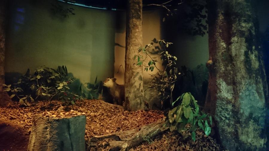 恐竜と忘れ物☆後編☆【上木戸店】 新潟県新潟市にあるザ・ゴールド 上木戸店の画像1