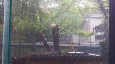 雨の日にシャンシャン【県央店】 新潟県燕市にあるザ・ゴールド 県央店(※10/21に閉店いたしました)の画像2