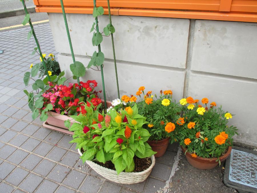 夏季休業日のお知らせ☆ 【柏崎店】 新潟県柏崎市にあるザ・ゴールド 柏崎店の画像3
