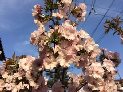 咲きました!  【長岡店】 新潟県長岡市にあるザ・ゴールド 長岡店の画像2