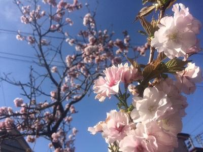 もうすぐ開花 【長岡店】 新潟県長岡市にあるザ・ゴールド 長岡店の画像2