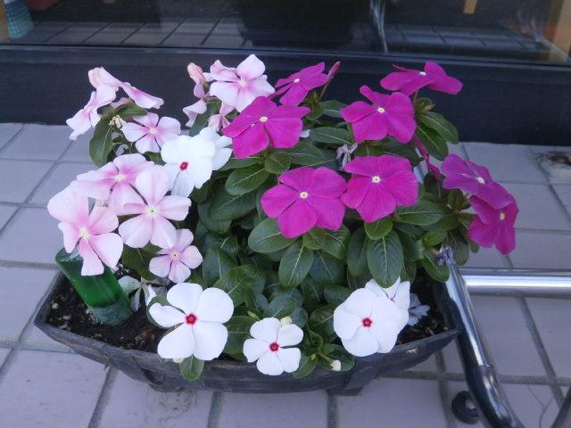 秋になりますね【いわき小名浜店】 福島県いわき市にあるザ・ゴールド いわき小名浜店の画像1