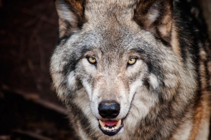 第三回、人狼用語について。【福島店】 福島県福島市にあるザ・ゴールド 福島店の画像1