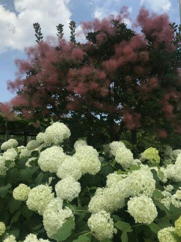 紫陽花✤【福島店】 福島県福島市にあるザ・ゴールド 福島店の画像2