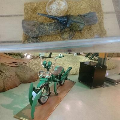 ムシテックワールドへ行ってきました【福島店】 福島県福島市にあるザ・ゴールド 福島店の画像2
