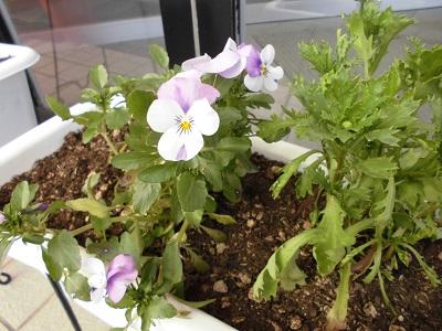 お花植替えました♪ 【北上インター店】 岩手県北上市にあるザ・ゴールド 北上インター店の画像3