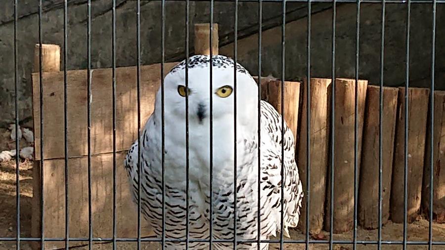 上野動物園【函館店】 北海道函館市にあるザ・ゴールド 函館店の画像2
