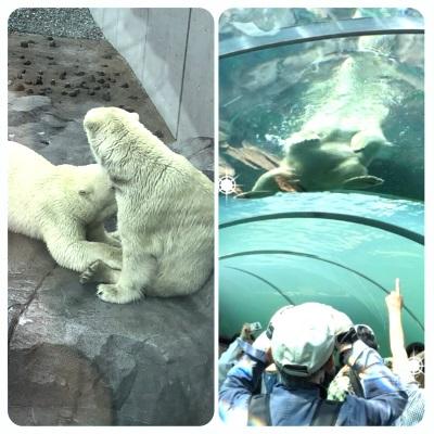 円山動物園 【発寒店】 北海道札幌市にあるザ・ゴールド 発寒店の画像2