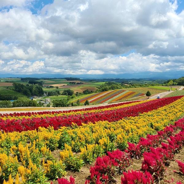 色彩の丘へ♪【江別店/北海道/江別市】 北海道江別市にあるザ・ゴールド 江別店の画像5