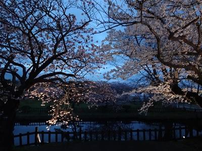 松前桜まつり平成から令和へ【平岡店】 北海道札幌市にあるザ・ゴールド 平岡店の画像5